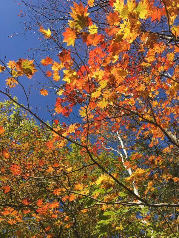 治部坂高原紅葉真っ盛り